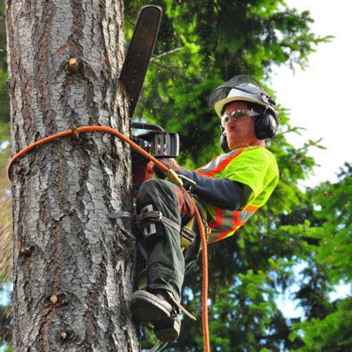 MJR Tree Service Swinging Banner Logo Victoria Duncan Nanaimo Courtney Campbell River