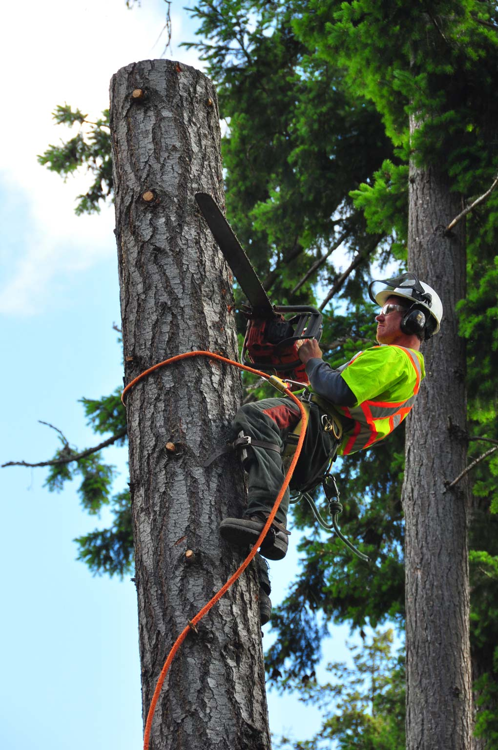 MJR Tree Service Victoria Duncan Nanaimo Courtenay Campbell River
