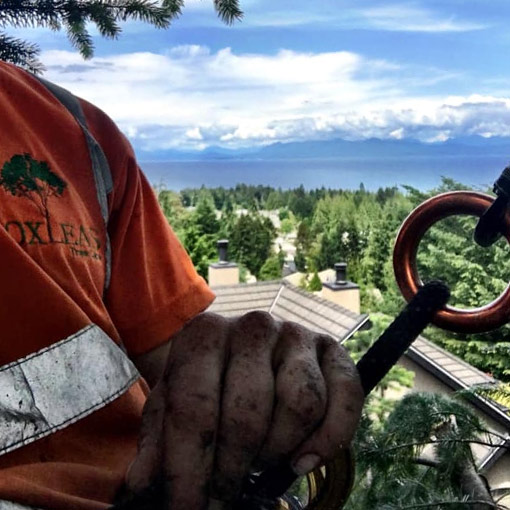 MJR Tree Service Duncan View